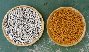 Dried Beans: Jacob's Cattle (left) and Indian Woman