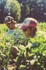 Juan Cuevas and Fran Grayson working at their Branch Out Farm in Soquel