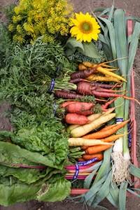 veggies_nowriting