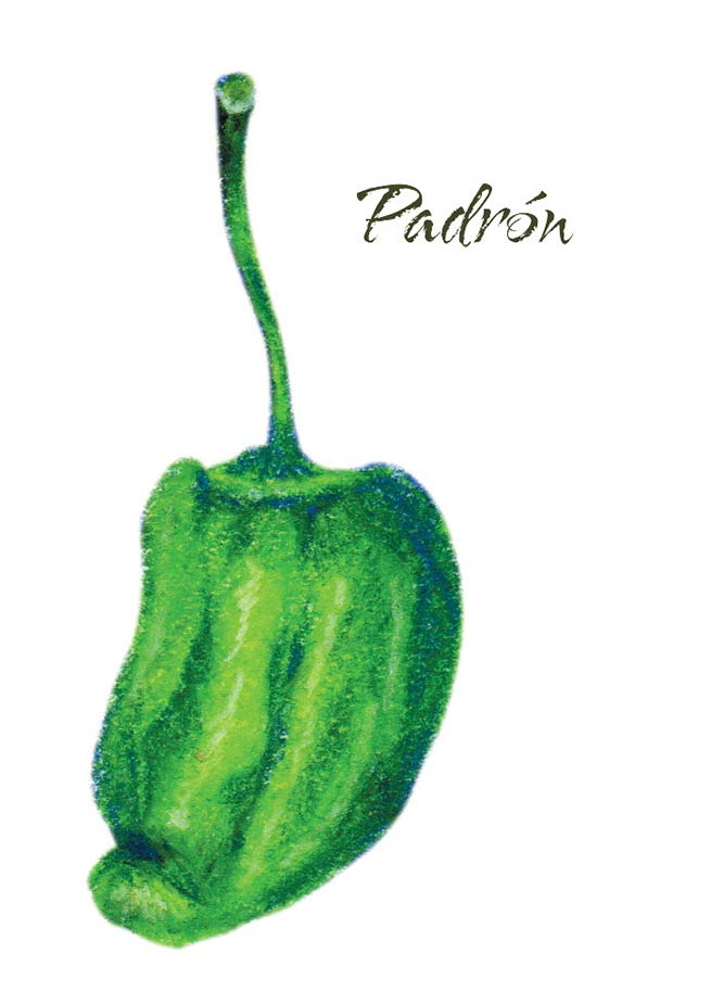 seasonPeppersPadron