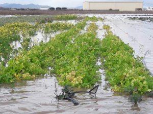 Flooding at Catalán Family Farm