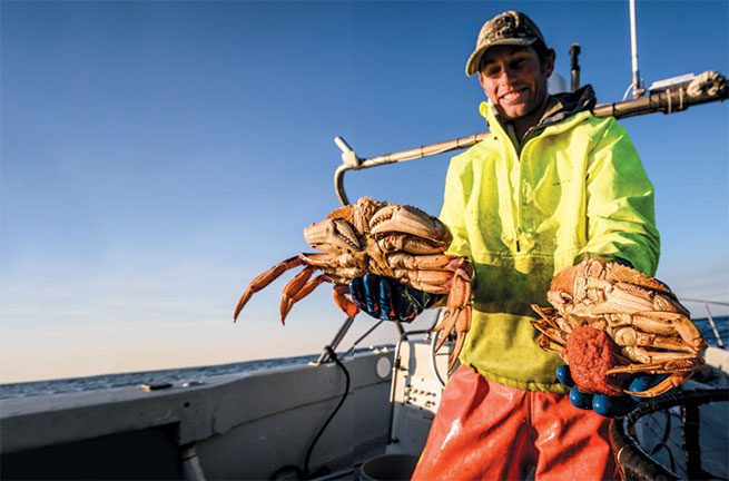 WHAT'S IN SEASON: DUNGENESS CRAB - Edible Monterey Bay