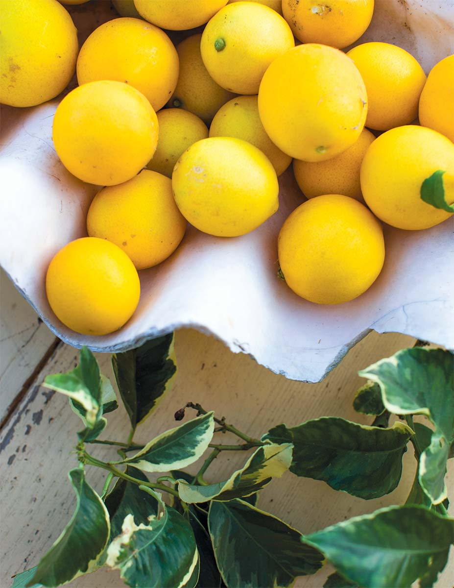 Meyer Lemons Brighten Up The Dark Months With These California Classics Edible Monterey Bay
