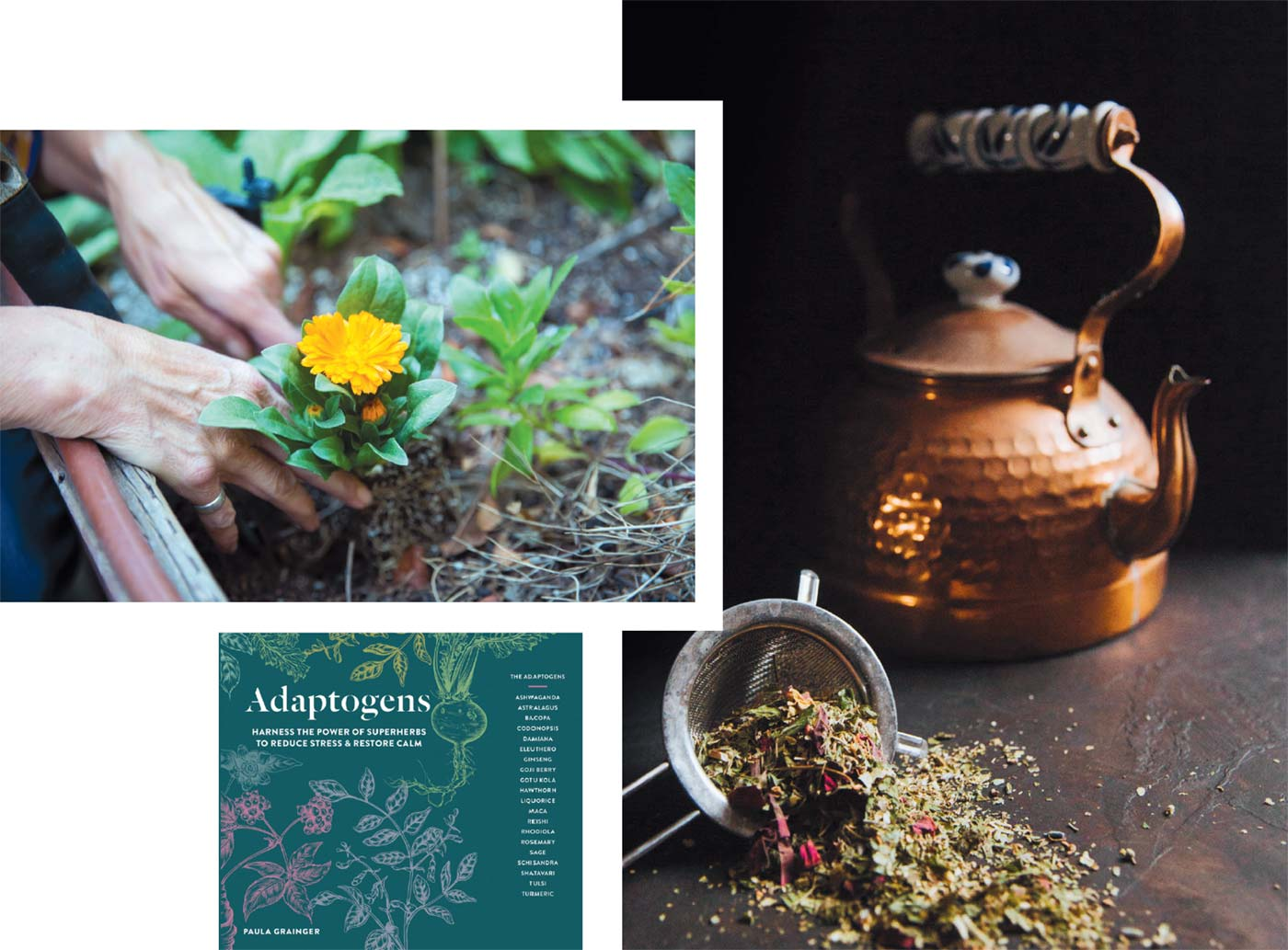 The Herbalist For Mac