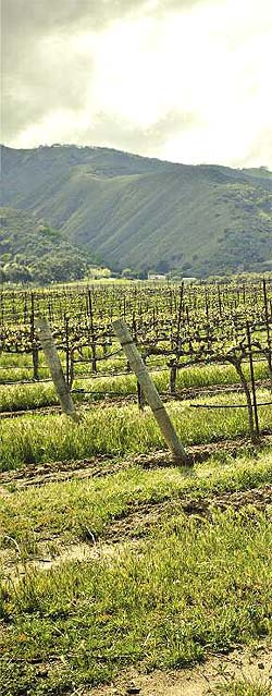 ON THE VINE: LABOR OF LOVE