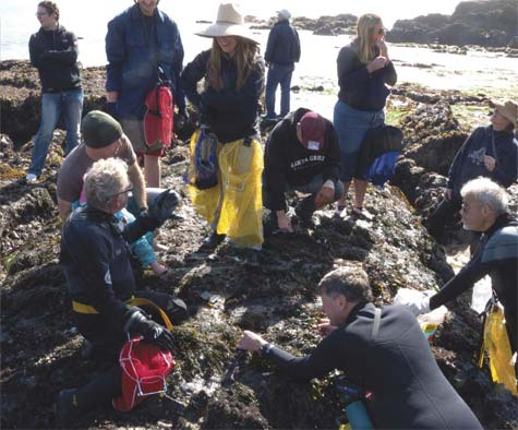 foraging for mussels