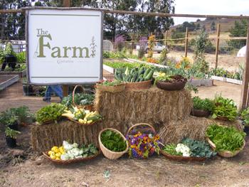 Costanoa_Farm_
