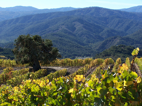 Mouthwatering: Holman Ranch releases the menu for its upcoming pop-up vineyard-to-table dinner