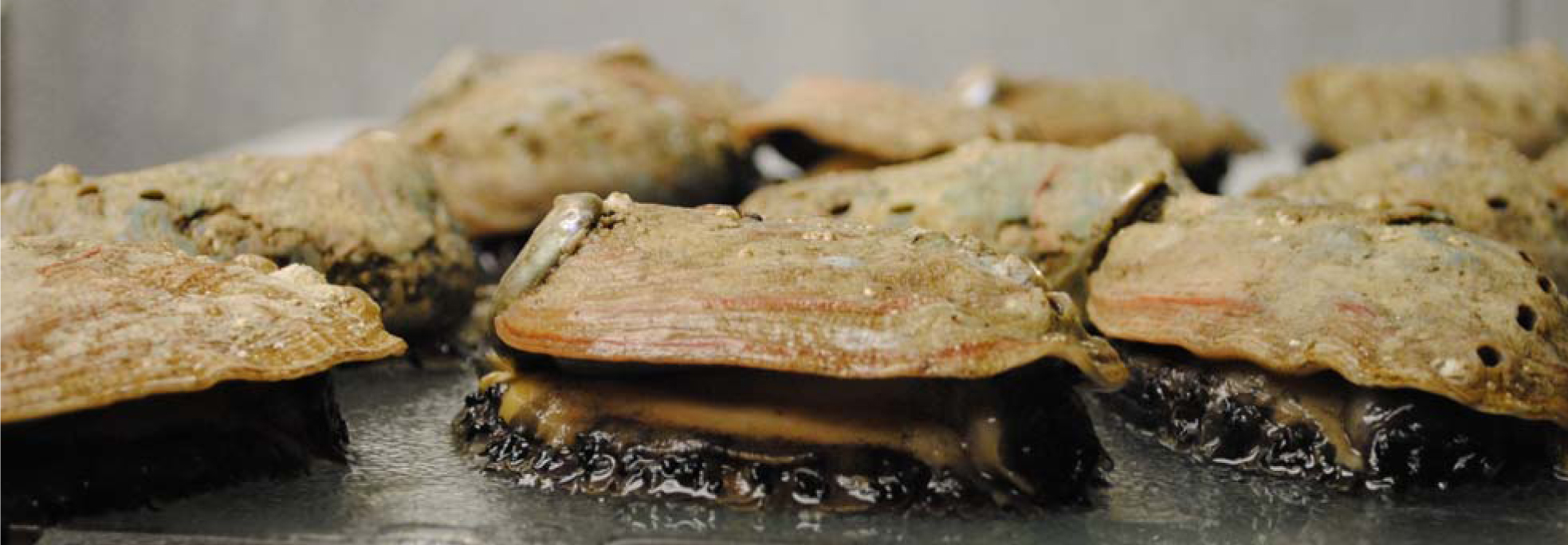 Abalone: Local, delectable, and not as daunting as I previously imagined