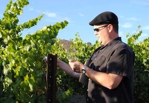 vineyards_tour
